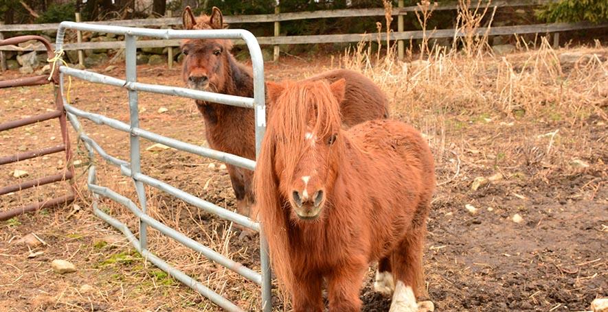 Equine Veterinarian in Stafford Springs, CT