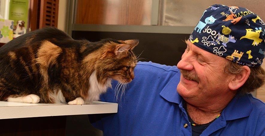 Cat Veterinarian in Stafford Springs, CT