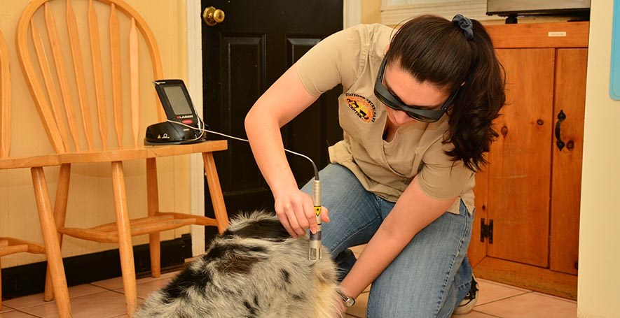 Veterinarian Laser Therapy in Stafford Springs, CT